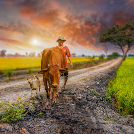 Going home by Sơn Hải - People Street & Candids ( countryside, rice, street, vietnamese, cow, vietnam, road, people, asian, field, sky, tree, sunset, asia, cloud, dog )
