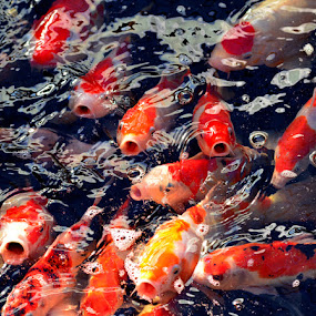 by Harry Aiee - Animals Fish