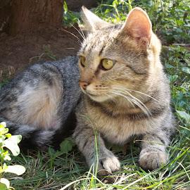 Ден by Georgi Kolev - Animals - Cats Portraits ( треви., слънце., храсти., котка., ден. )