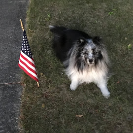 Celebrating the 4th by Stephanie Parmley Givens - Animals - Dogs Portraits