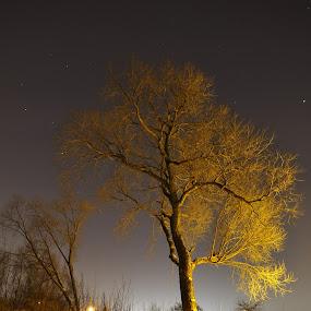 lonely tree by Dalia Račkauskaitė - Nature Up Close Flowers - 2011-2013 ( lights, night photography, tree, snow )