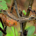 robber-flies