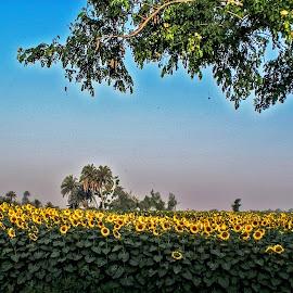 by Mohsin Raza - Landscapes Prairies, Meadows & Fields