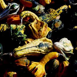 Gourds by Mark Zukaitis - Nature Up Close Gardens & Produce