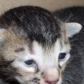 kitten closup by Basant Malviya - Animals - Cats Kittens ( kitten, animal,  )