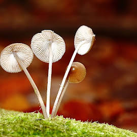 A contre sens by Gérard CHATENET - Nature Up Close Mushrooms & Fungi (  )