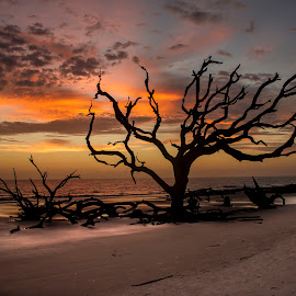 Driftwood Beach by Dorothy Rigsby - Landscapes Beaches