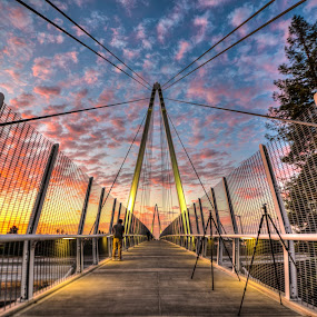 The Mary Avenue Bridge, also called the Don Burnett Bicycle-Pedestrian Bridge, is a cable-stayed bridge over Interstate 280 (California) in Cupertino, California carrying bicycle and pedestrian traffic. North of I-280 by Jayasimha Nuggehalli - Buildings & Architecture Bridges & Suspended Structures
