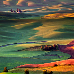 View from Steptoe Butte by Terry Scussel - Landscapes Sunsets & Sunrises ( palouse, washington state, steptoe butte )
