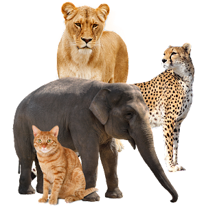 تعليم أسماء الحيوانات For PC (Windows & MAC)