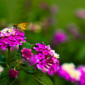 Photogenic butterfly by Timothy Horng - Nature Up Close Flowers - 2011-2013