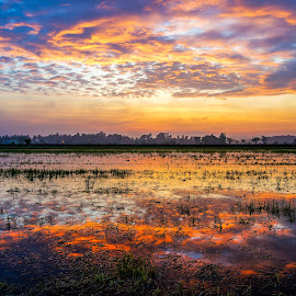 Paddy Field Sunrise by Tan Heng - Landscapes Sunsets & Sunrises