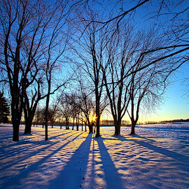 As the Sun Misses the Flower in the Depths of Winter by Phil Koch - Landscapes Prairies, Meadows & Fields ( vertic  al, travel, yellow, love, nature, snow, weather, perspective, light, orange, colors, art, twilight, ins  pired, mood, journey, horizon, portrait, country, environment, winter, dawn, season, serene, outdoors, trees, lines, natural, hope, inspirational, wisconsin, ray, joy, beauty, landscape, sun, photography, s  ky, life, ice, emotions, dramatic, horizons, clouds, office, park, heaven, beautiful, scenic, living, morning, shadows, field, unity, blue, sunset, amber, peace, meadow, beam, earth, sunrise )
