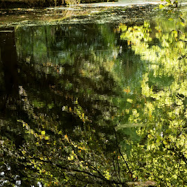 Haagse Bos, Den Haag, Netherlands by Serguei Ouklonski - City,  Street & Park  City Parks ( forest, color, woodland, flora, tourism, full frame, scenic, standing water, desktop, fall, land, season, wood, canal, day, europe, park, no person, fair weather, expression, reflection, nature, tranquil scene, tree, beauty in nature, leaf, water, environment, outdoors, light, backgrounds, plant, green color, waterfront, growth, tranquility, scenics - nature, travel, no people, landscape, nature landscape )