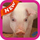 Piggy Wallpaper APK for Bluestacks