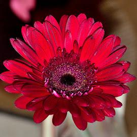 by Vishal Bhatnagar - Flowers Flower Arangements