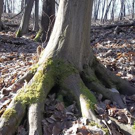 Гора by Georgi Kolev - Nature Up Close Trees & Bushes ( гора., слънце., листа., сенки., време. )