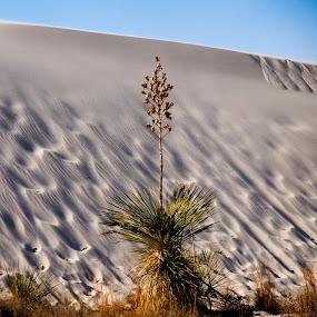 no snow by Karl Jones - Nature Up Close Sand