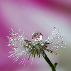 by Wahyudi Barasila - Nature Up Close Other plants