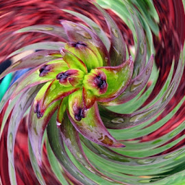 by Cathy Elliott-Burcham - Digital Art Abstract ( abstract curves, abstract, swirls, flower, multicolored )