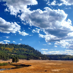 Mountain meadow by D.j. Nichols - Instagram & Mobile Android ( mountain meadow )
