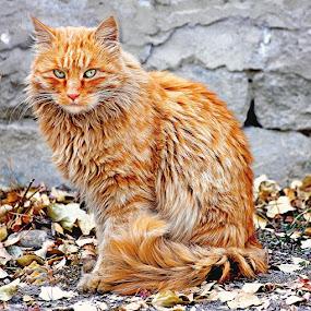 Cat by Muhammad Amin Zia - Animals - Cats Portraits