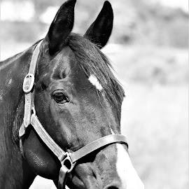 Beauty by Linda    L Tatler - Black & White Animals (  )