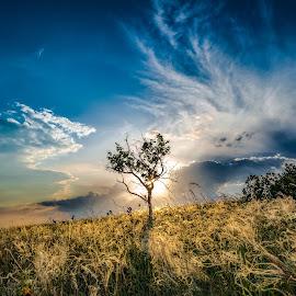 Feather Grass by Nagy Levi - Landscapes Prairies, Meadows & Fields ( clouds, field, tree, grass, green, sunset, 2015, sundown, yellow, landscape, nikon, light, sun )