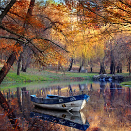 autumn colors by Iancu Cristi - Landscapes Forests