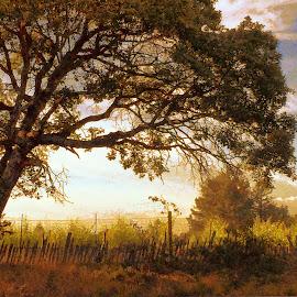 golden hour by Leslie Hunziker - Instagram & Mobile iPhone ( clouds, vineyard, nature, fog, trees, sun, fields,  )