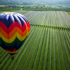 Over the fields by Mitja Mladkovic - Landscapes Prairies, Meadows & Fields ( hot air balloon, vineyard, colors, green, meadows, morning, sunlight, balloon, flying, nature, fly, horizontal, above, high, fields,  )