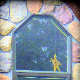 Sea Star In the Window by Becky Luschei - Buildings & Architecture Homes ( unique, window, whimsical, starfish, goodbye, waving, star, sea, house )