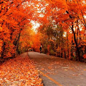 Awesome Autumn by Avishek Bhattacharya - Landscapes Travel ( indiana, monon trail, color, autumn, foliage, fall, roadscape, walk, carmel,  )