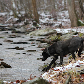 Playing in the Creek by Kim Tindol - Animals - Dogs Playing