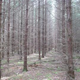Forest in line by Jouni Linden - Landscapes Forests