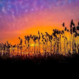 reed by Ratimir Knezevic - Landscapes Prairies, Meadows & Fields