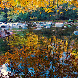 Reflections Under the Autumn Leaves by Carol Ward - Landscapes Waterscapes ( tn, autumn leaves, great smoky mountains national park, reflections, trees, leaves, rocks, smoky mountains )