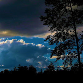 Bright & Dark with Pines by Christopher Barker - Landscapes Cloud Formations ( silhouets, clouds, sunset, tree tops )