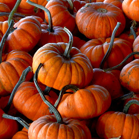 Pumpkins by June Morris - Nature Up Close Gardens & Produce ( gardens, nature close up, photography, produce,  )