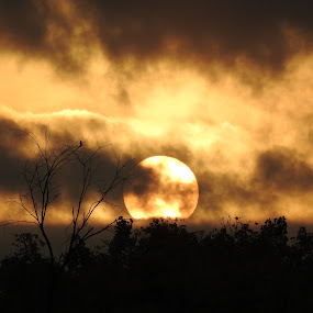 Mystic Moon by Kathy Woods Booth - Landscapes Sunsets & Sunrises ( michigan, moon, moonlight, moonrise, halloween )
