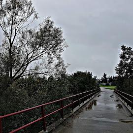 THE BRIDGE by Raluca Petreus - Buildings & Architecture Bridges & Suspended Structures ( #bridge #rain #rainy #water )