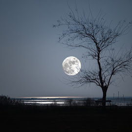 island of grado The moon by Gianfranco Pucher - Digital Art Places ( calm, obsurity, water, moon, tree, peace, sea, shine, night, grado, island,  )
