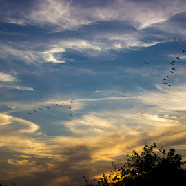 Dancin clouds by Kirti Umrigar - Landscapes Cloud Formations ( nature, sunset, clouds,  )