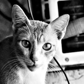 by Devyani S.Rathore - Animals - Cats Portraits