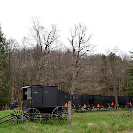 Amish Buggies by Crystal Bailey - Transportation Other