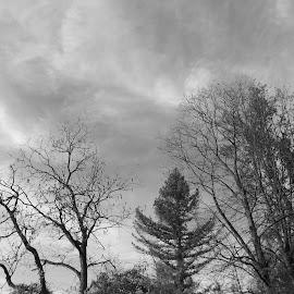 Есен by Georgi Kolev - Black & White Landscapes ( ден., есенен., време., тишина., дървета. )