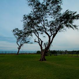 Mahabalipuram Beach by Vijai Ganesh - City,  Street & Park  Historic Districts ( temple, nature, trees, india, beach, mahabalipuram, heritage, chennai, tamil nadu )