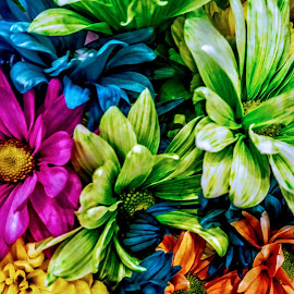 All Colors Matter by Carlo McCoy - Nature Up Close Other plants