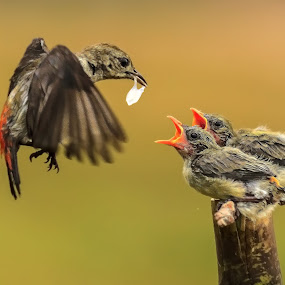 Ours mom is coming II by MazLoy Husada - Animals Birds