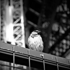 Bird at Eiffel Tower by Harry Meletiadis - Black & White Animals ( paris, animals, black and white, blur, architecture,  )